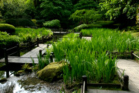 Japanese Garden: Waiting For The Irises