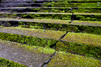 Moss-covered Steps