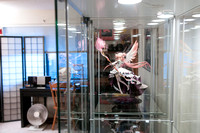 Madoka in the Display Case